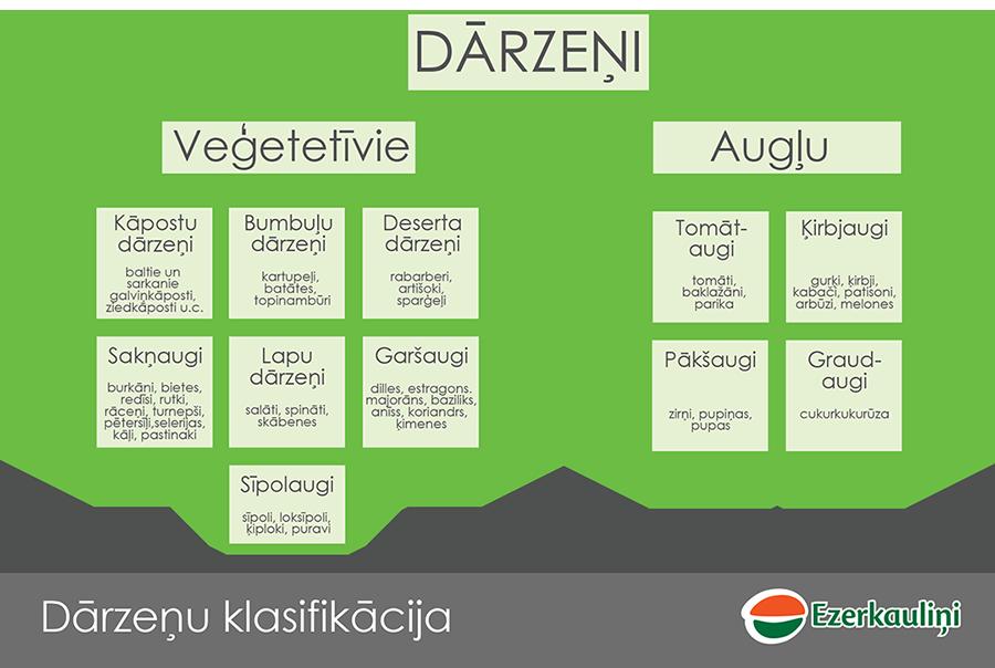 skolas-auglis-klasifikacija-11